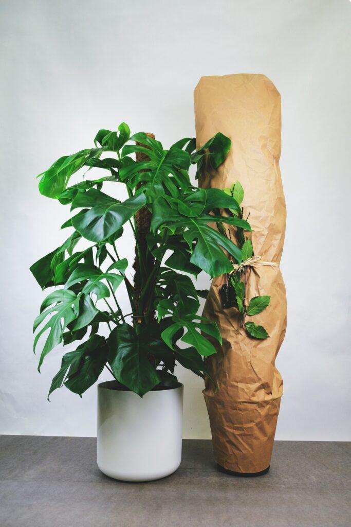 pakowanie roślin