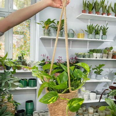 koszyk wiszacy lola flora