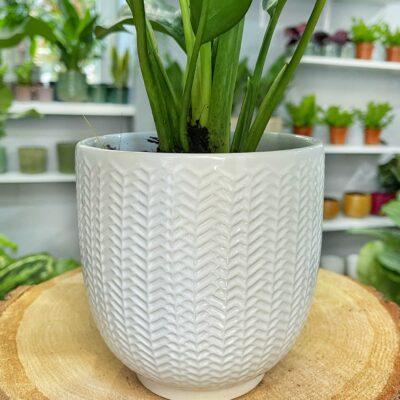 oslonka white lolaflora